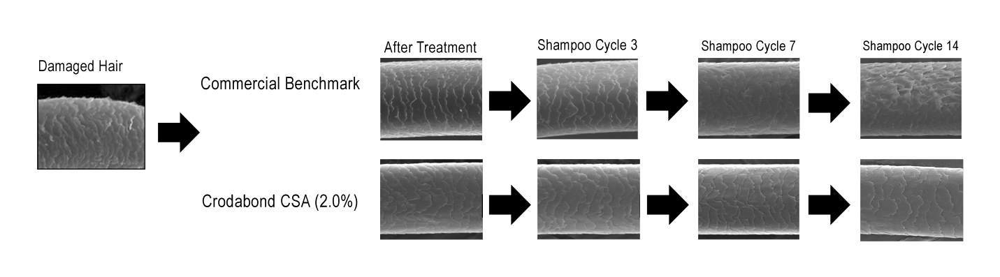 shows the cycle of the product on damaged hair.